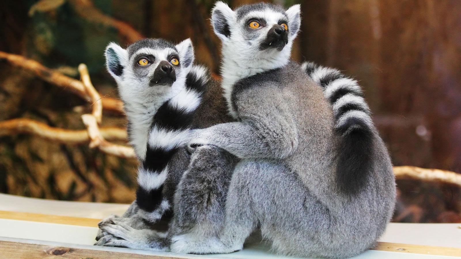 sehenswürdigkeiten-vendee-zoo