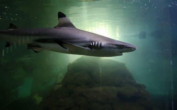sehenswürdigkeiten-vendee-aquarium-SimonBOURCIER
